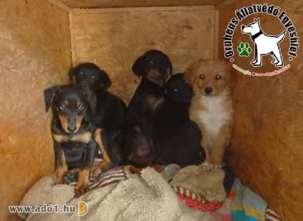 A felajánlott adó 1 %-ok is segítik a bajban lévő állatok mentését