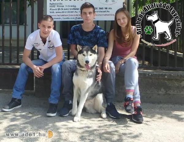 A felajánlott adó 1% segítségével biztonságba, majd szerető családhoz kerülnek a bajba jutott állatok