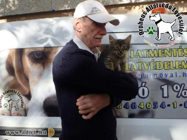 Adó 1 százalék segítségével bajban lévő állatok mentése