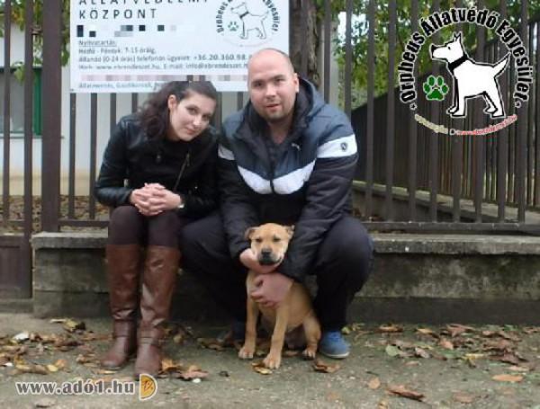 Adó 1 százalék támogatások révén sok kutyus talált szerető Gazdira
