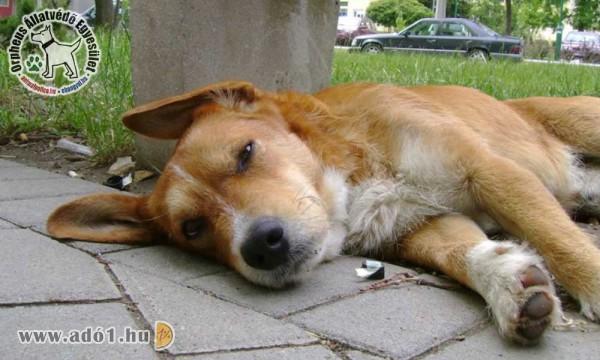 Adó 1% állatvédelemre - Orpheus Állatvédő Egyesület