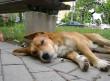 Állatmenhely, mentett kutyusok adó 1%-ból