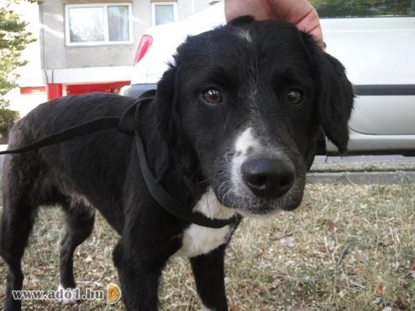 Állatmentő Szolgálat Alapítvány - Állatvédelem, állatmentés