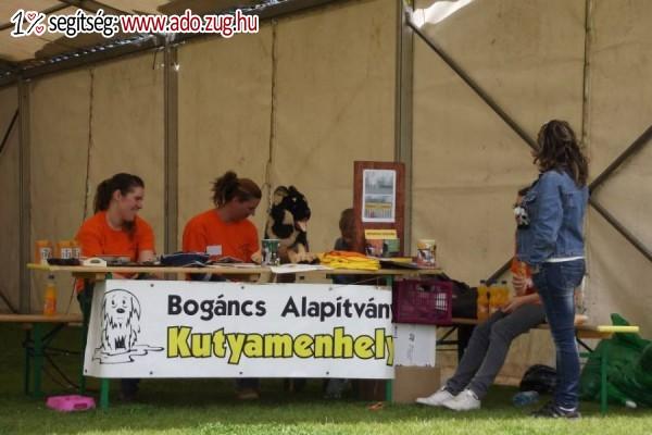 Bogáncs Kisállatotthon Alapítvány