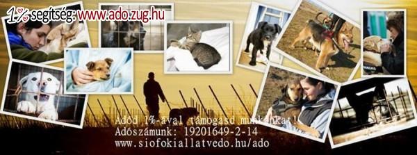 Siófoki Állatvédő Alapítvány