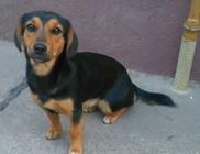 Mentőöv Állatvédő Egyesület - Állatvédelem, állatmentés