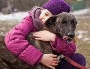 Állat és Ember Állat- és Természetvédő, Szabadidő és Kulturális Egyesület - Állatvédelem, állatmentés