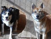 Hajdúszoboszlói Kutyabarátok Egyesület - Állatvédelem, állatmentés