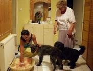 Kéz A Mancsért Civil Állatvédő Egyesület - Állatvédelem, állatmentés