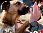 Emberek Az Állatokért Alapítvány