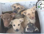 Ebangyal: állatmentés - gazdikereső