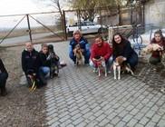 Állatmenhely Nyílt Alapítvány