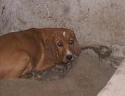 Szarvas Kóbor és Elveszett Kutyáiért Állatvédő Egyesület
