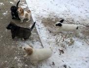 Kutyamentő Angyalok Egyesület - Állatvédelem